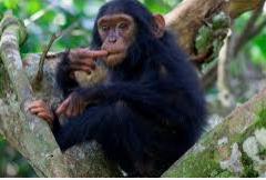Kibale Forest National park