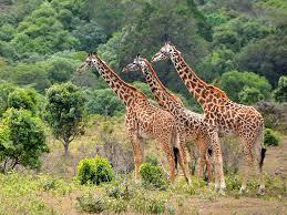 6 days Tanzania Safari