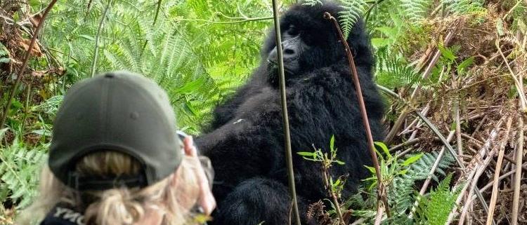 6 Days Masai Mara and Gorilla trekking