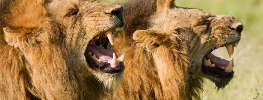 6 Days Safari Tour in Rwanda