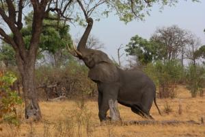 3 Days Ngorongoro Tarangire Safari