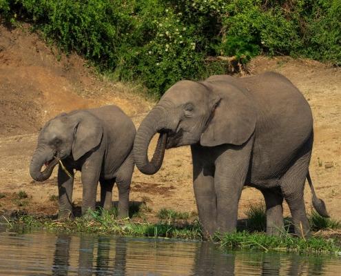 12 days wildlife and gorilla safari