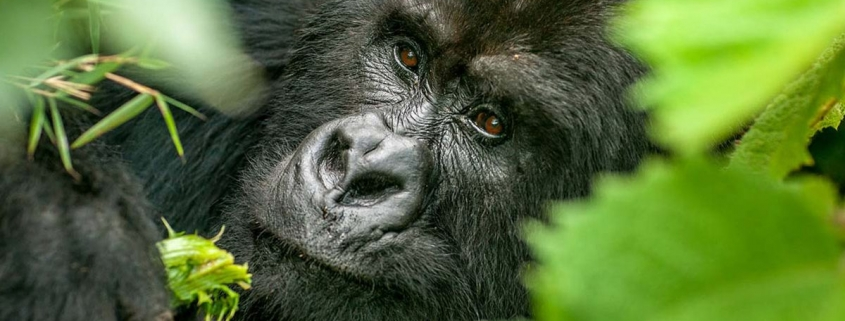8days Uganda safari