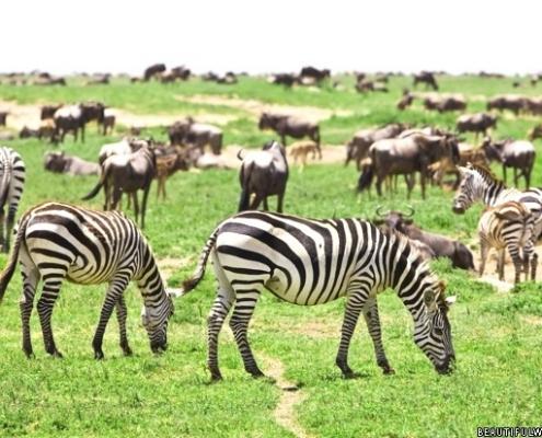 Animals in Serengeti/Serengeti animals