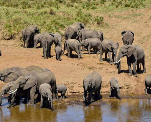 Tarangire National Park entry fees