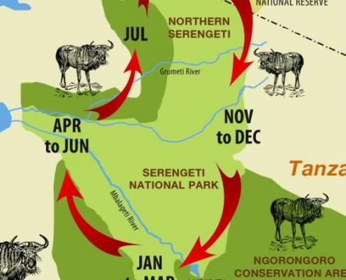 Wildebeest Migration Cycle