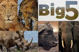 big 5 in Amboseli national park