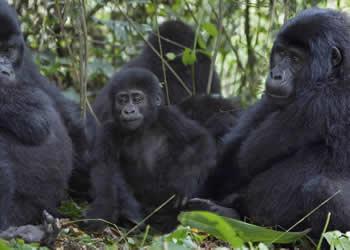 9 Days Uganda Gorilla trekking and Queen Elizabeth safari
